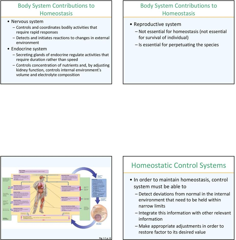 Not essential for homeostasis (not essential for survival of individual) Is essential for perpetuating the species Homeostatic Control Systems In order to maintain homeostasis, control system must be