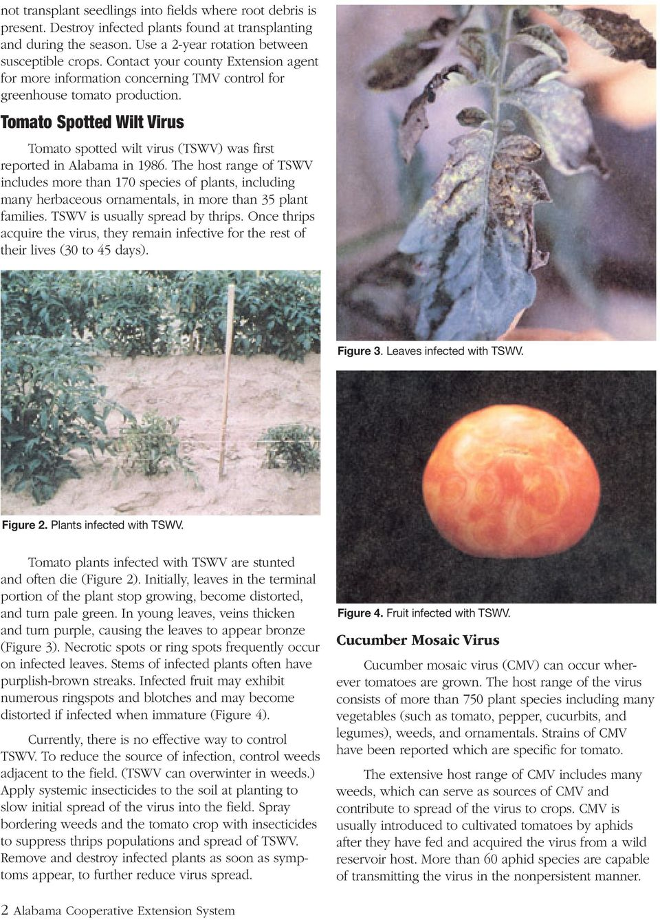 Tomato Spotted Wilt Virus Tomato spotted wilt virus (TSWV) was first reported in Alabama in 1986.