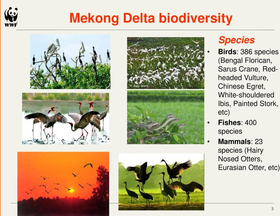White-shouldered Ibis, Painted Stork, etc) Fishes: 400