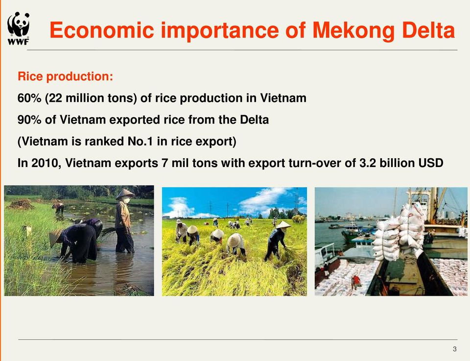 exported rice from the Delta (Vietnam is ranked No.