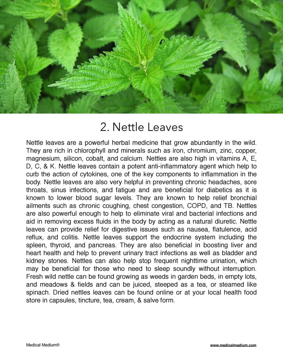 Nettle leaves contain a potent anti-inflammatory agent which help to curb the action of cytokines, one of the key components to inflammation in the body.