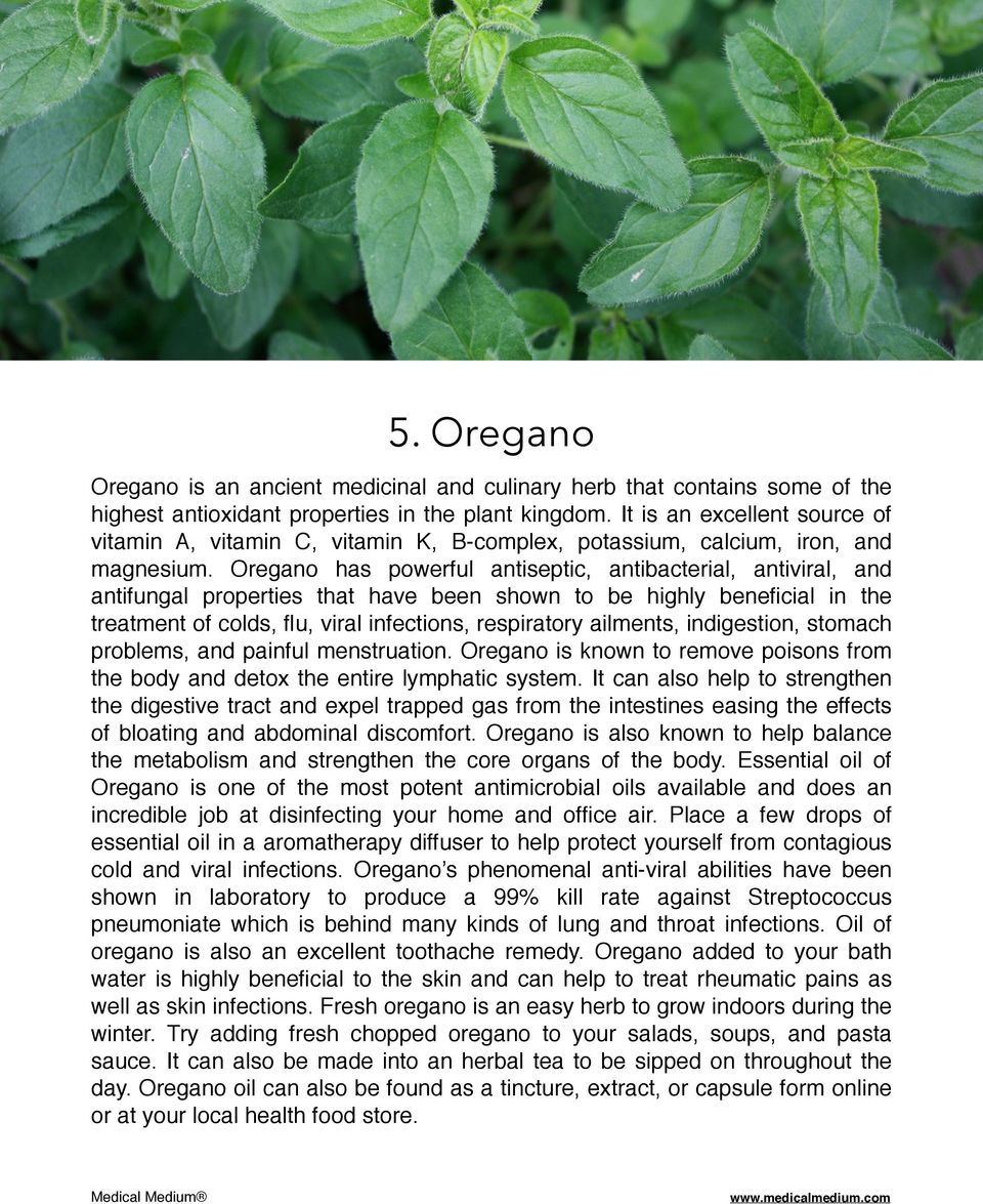 Oregano has powerful antiseptic, antibacterial, antiviral, and antifungal properties that have been shown to be highly beneficial in the treatment of colds, flu, viral infections, respiratory