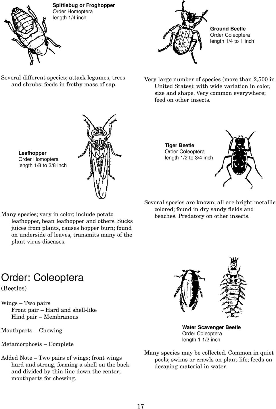 The drug from the Colorado beetle - an effective assistant in the fight against insects