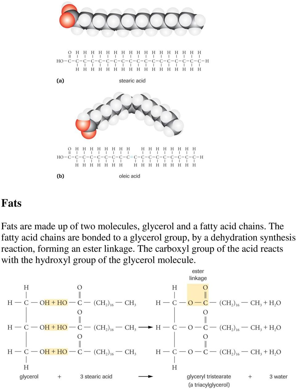 The fatty acid chains are bonded to a glycerol group, by a