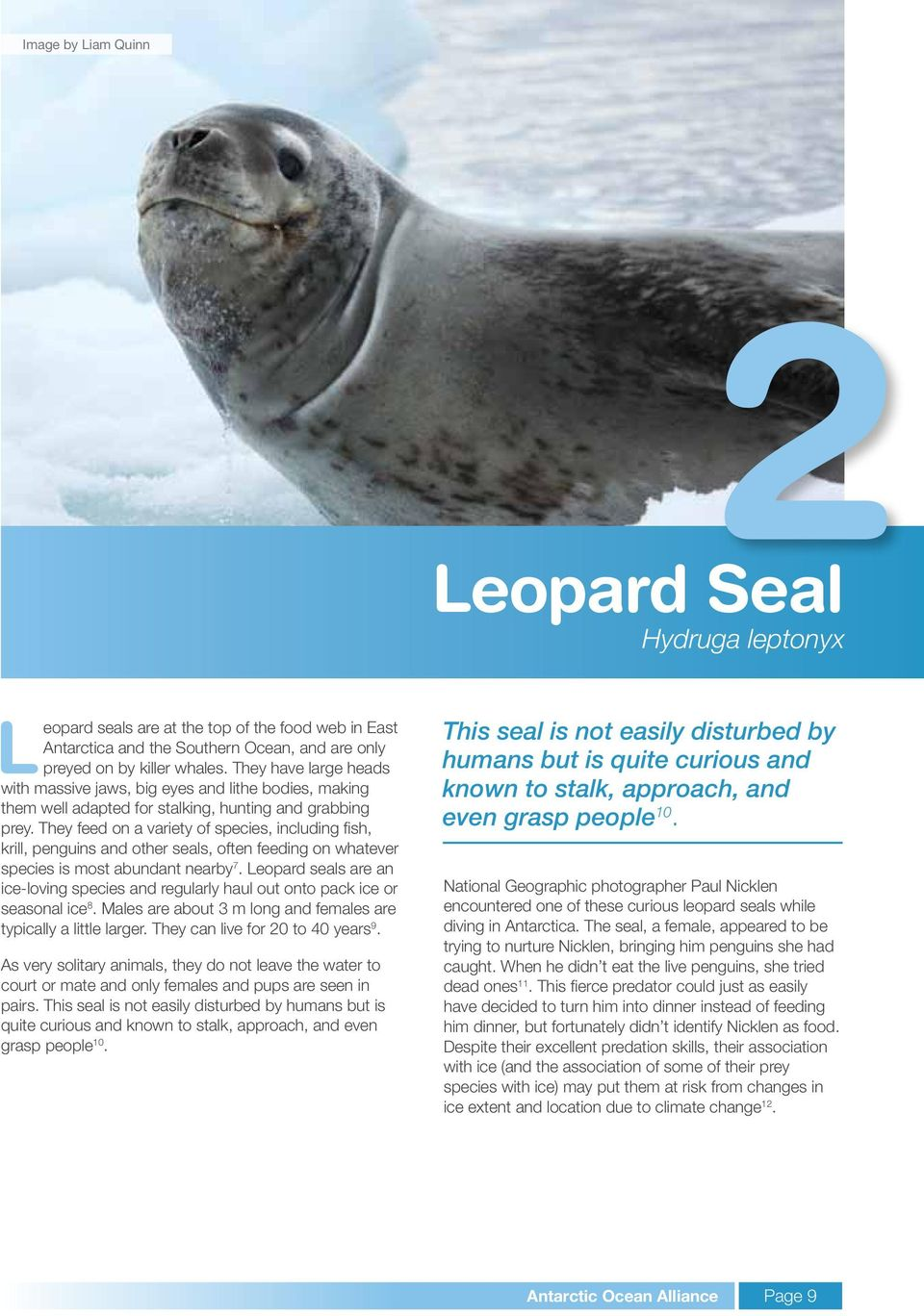 They feed on a variety of species, including fish, krill, penguins and other seals, often feeding on whatever species is most abundant nearby 7.