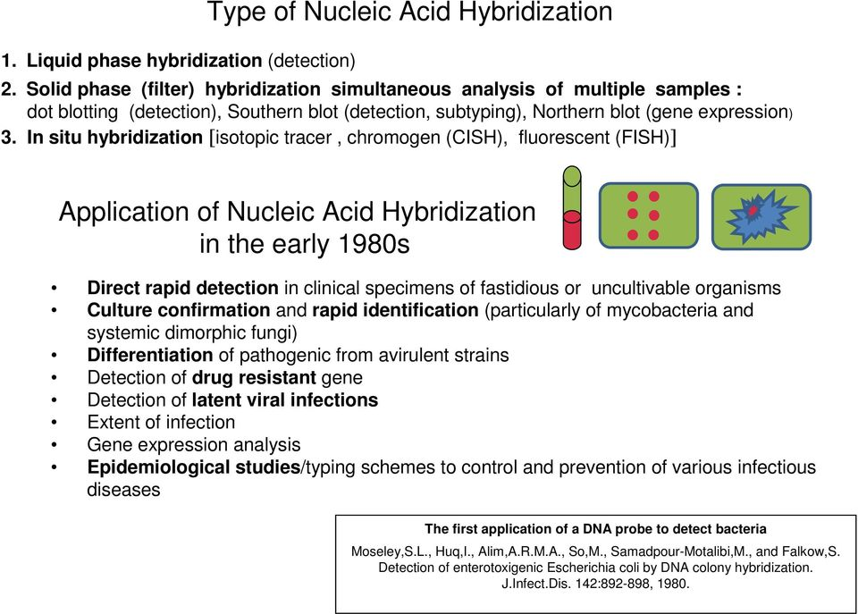 In situ hybridization [isotopic tracer, chromogen (CISH), fluorescent (FISH)] Application of Nucleic Acid Hybridization in the early 1980s Direct rapid detection in clinical specimens of fastidious