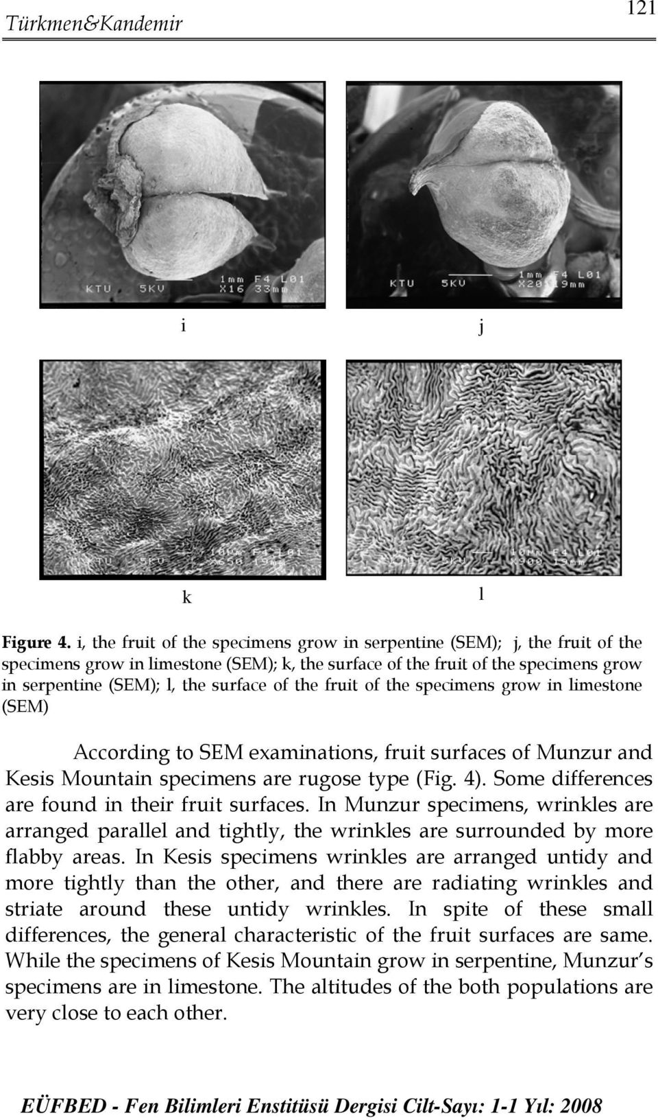 the fruit of the specimens grow in limestone (SEM) According to SEM examinations, fruit surfaces of Munzur and Kesis Mountain specimens are rugose type (Fig. 4).