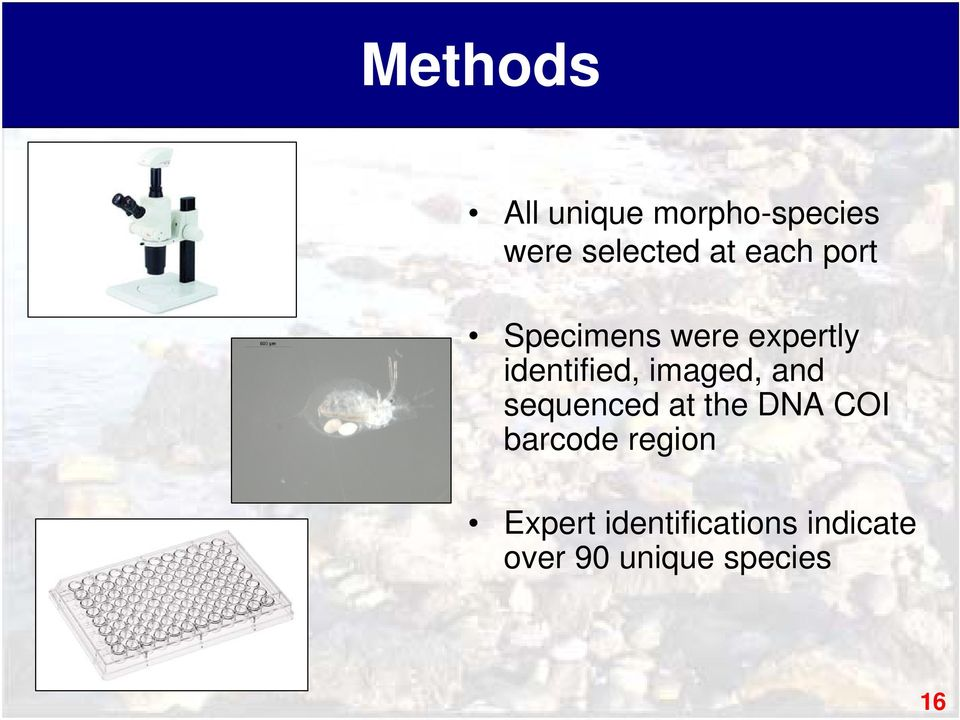 imaged, and sequenced at the DNA COI barcode region