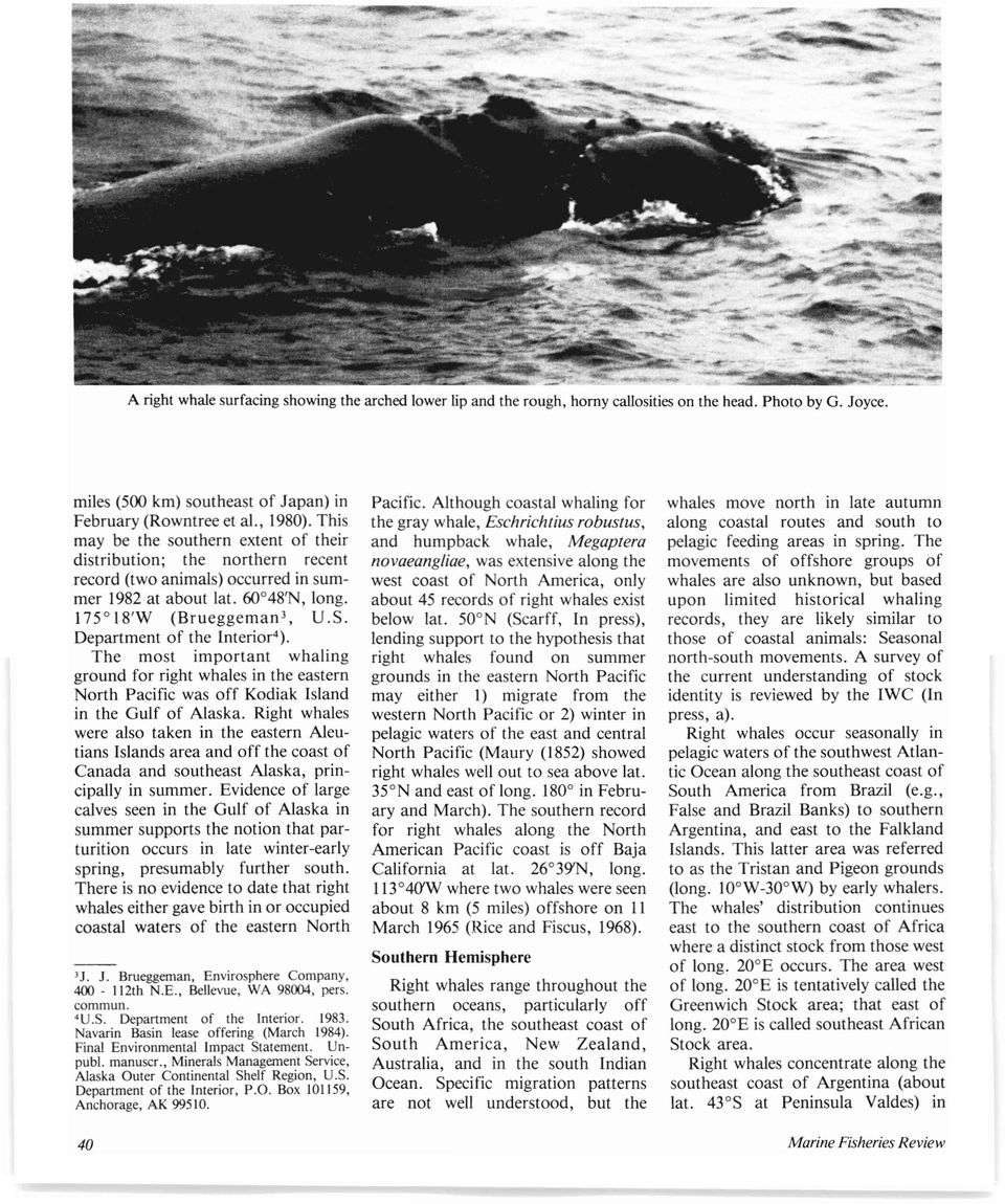 Department of the Interior 4 ). The most important whaling ground for right whales in the eastern North Pacific was off Kodiak Island in the Gulf of Alaska.