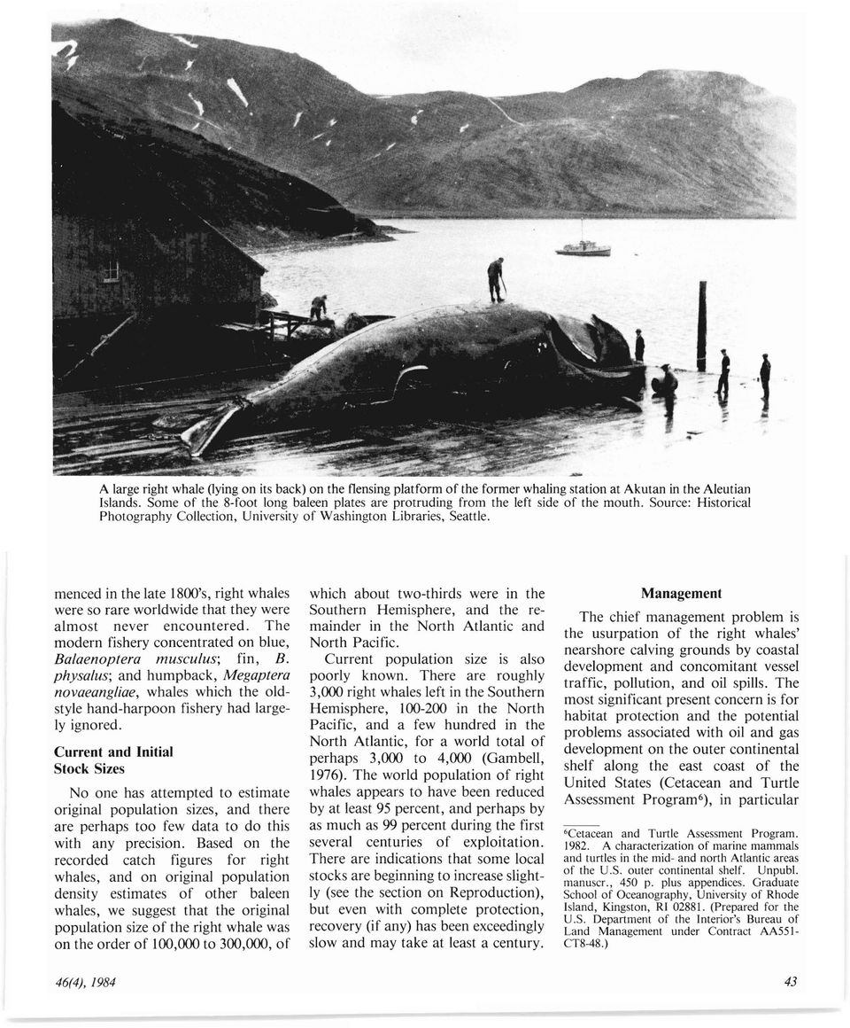 menced in the late 1800's, right whales were so rare worldwide that they were almost never encountered. The modern fishery concentrated on blue, Ba/aenoptera musculus; fin, B.