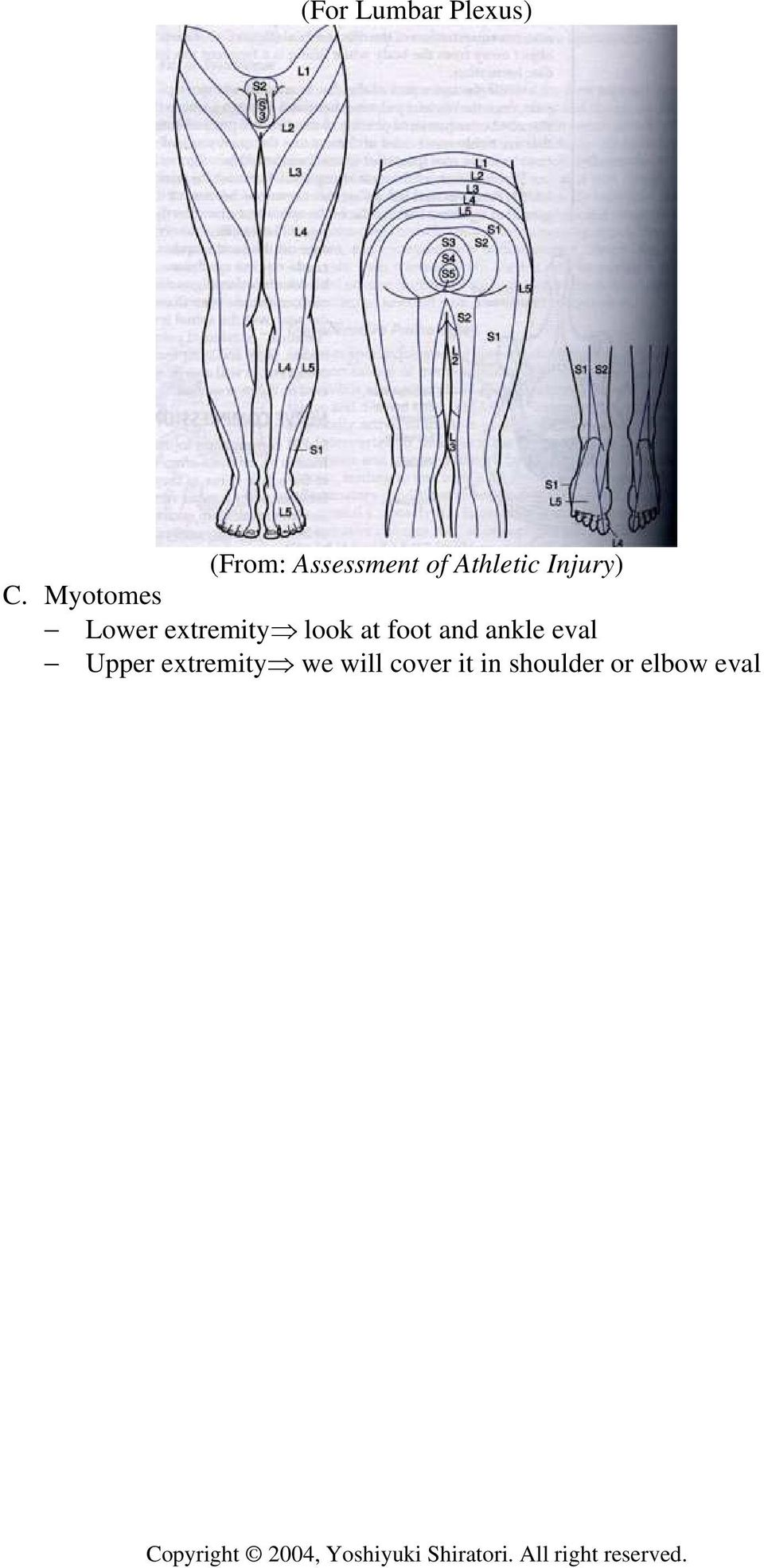 Myotomes Lower extremity look at foot and