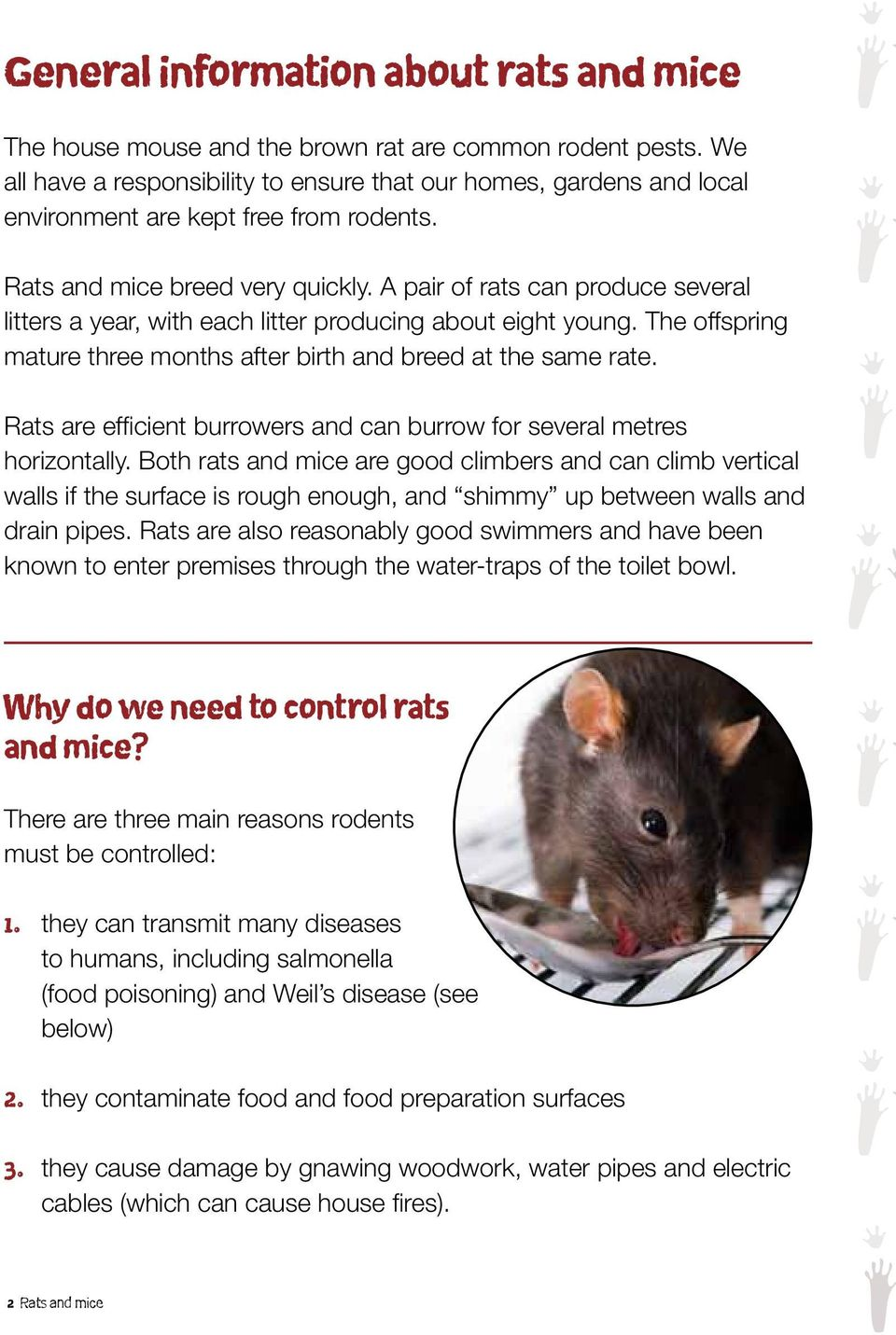 A pair of rats can produce several litters a year, with each litter producing about eight young. The offspring mature three months after birth and breed at the same rate.