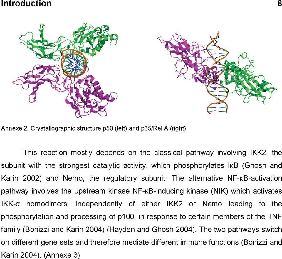 which phosphorylates IκB (Ghosh and Karin 2002) and Nemo, the regulatory subunit.