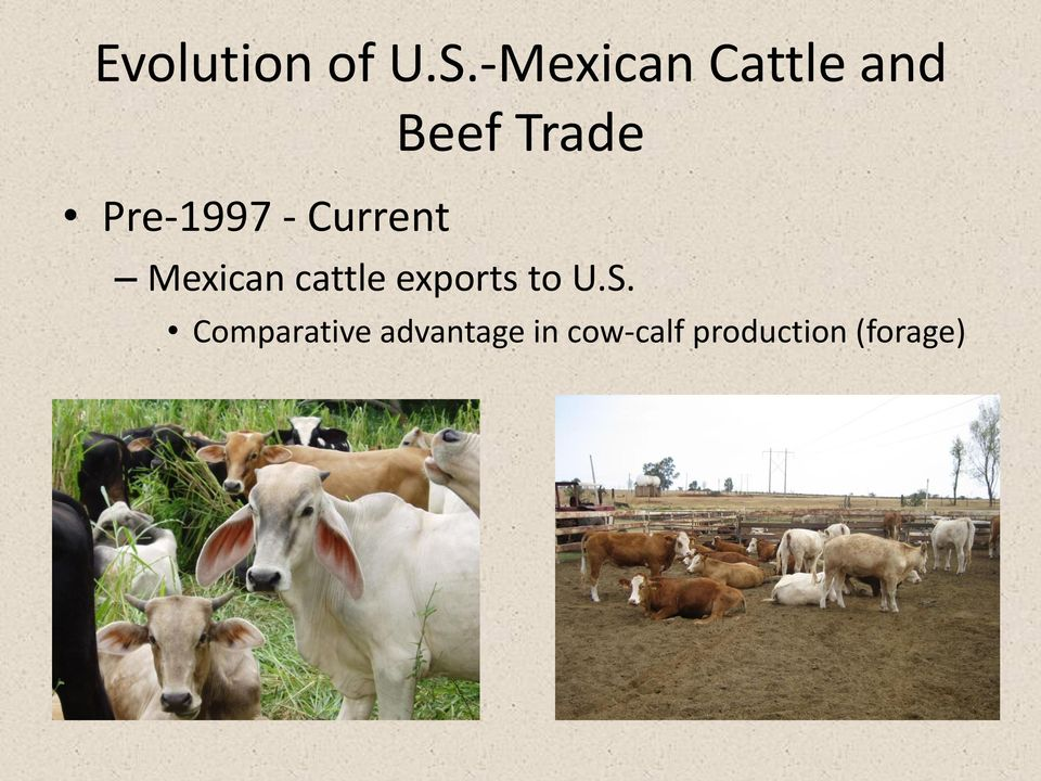 Pre-1997 - Current Mexican cattle