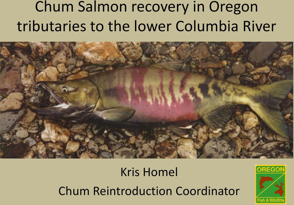 lower Columbia River Kris