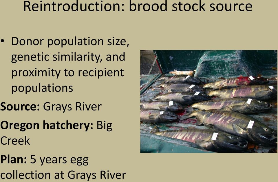 recipient populations Source: Grays River Oregon