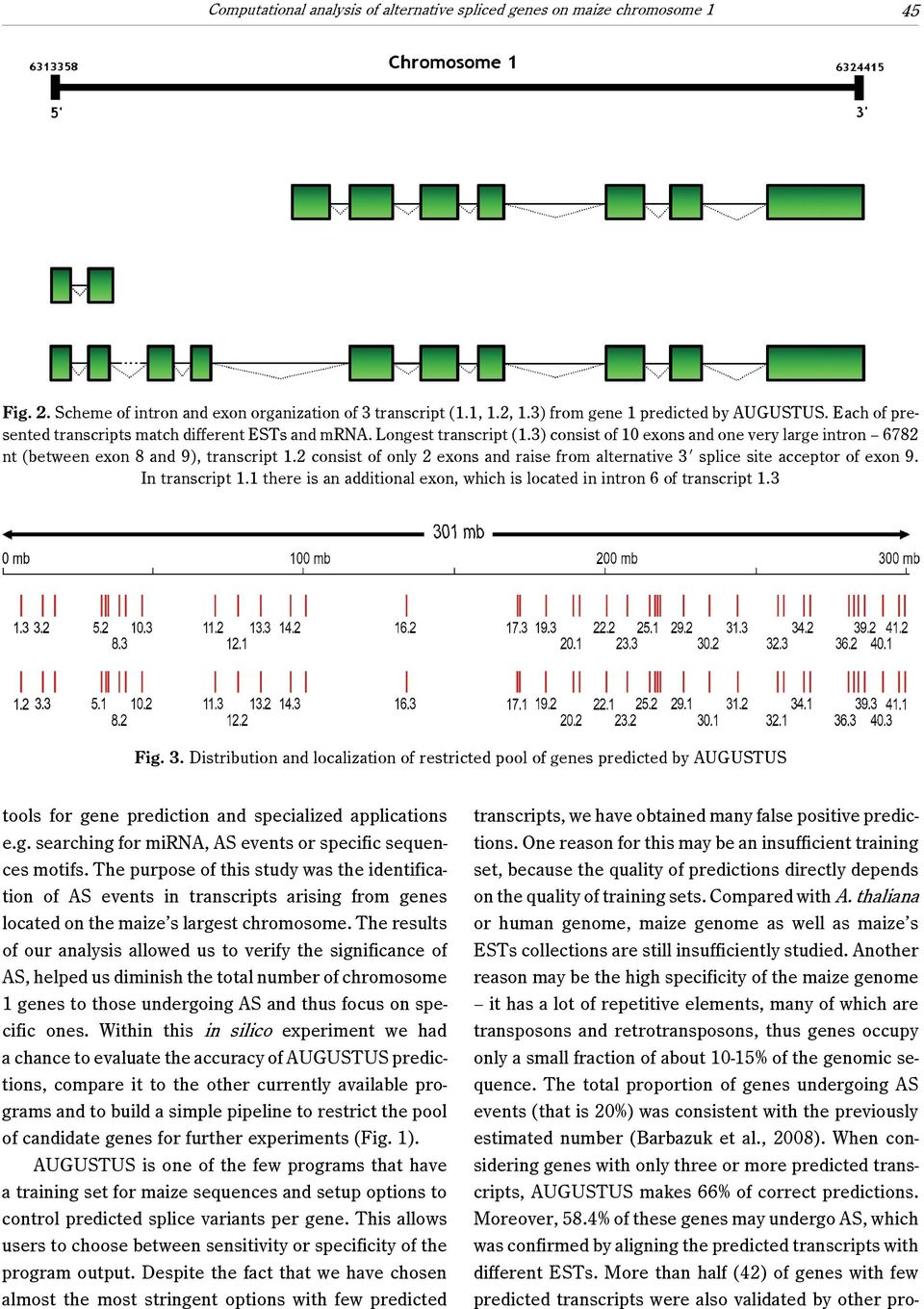 2 consist of only 2 exons and raise from alternative 3N splice site acceptor of exon 9. In transcript 1.1 there is an additional exon, which is located in intron 6 of transcript 1.3 Fig. 3. Distribution and localization of restricted pool of genes predicted by AUGUSTUS tools for gene prediction and specialized applications e.