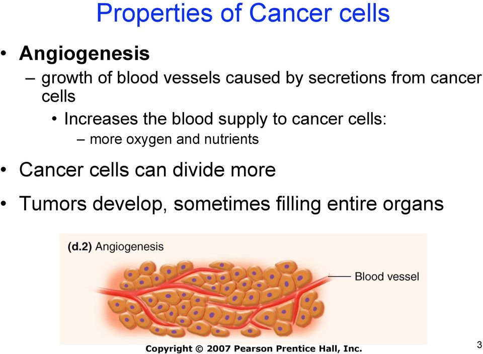 blood supply to cancer cells: more oxygen and nutrients Cancer