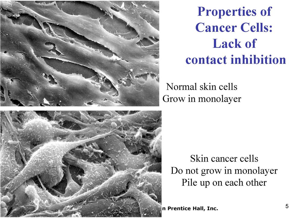 Grow in monolayer Skin cancer cells Do