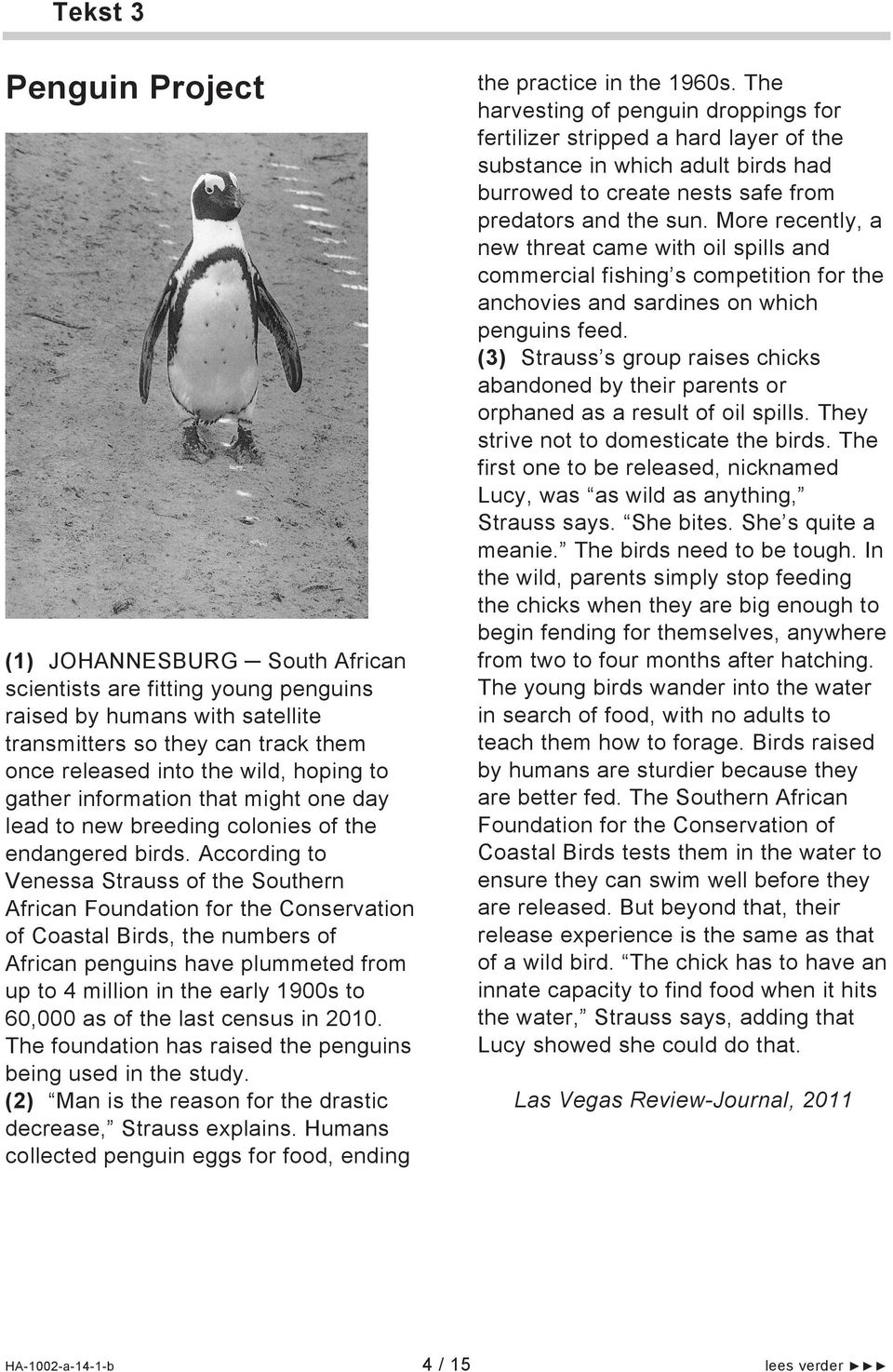 According to Venessa Strauss of the Southern African Foundation for the Conservation of Coastal Birds, the numbers of African penguins have plummeted from up to 4 million in the early 1900s to 60,000
