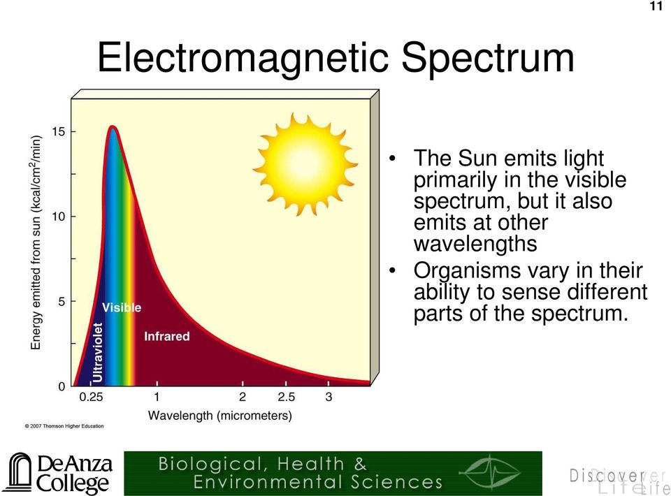 emits at other wavelengths Organisms vary in