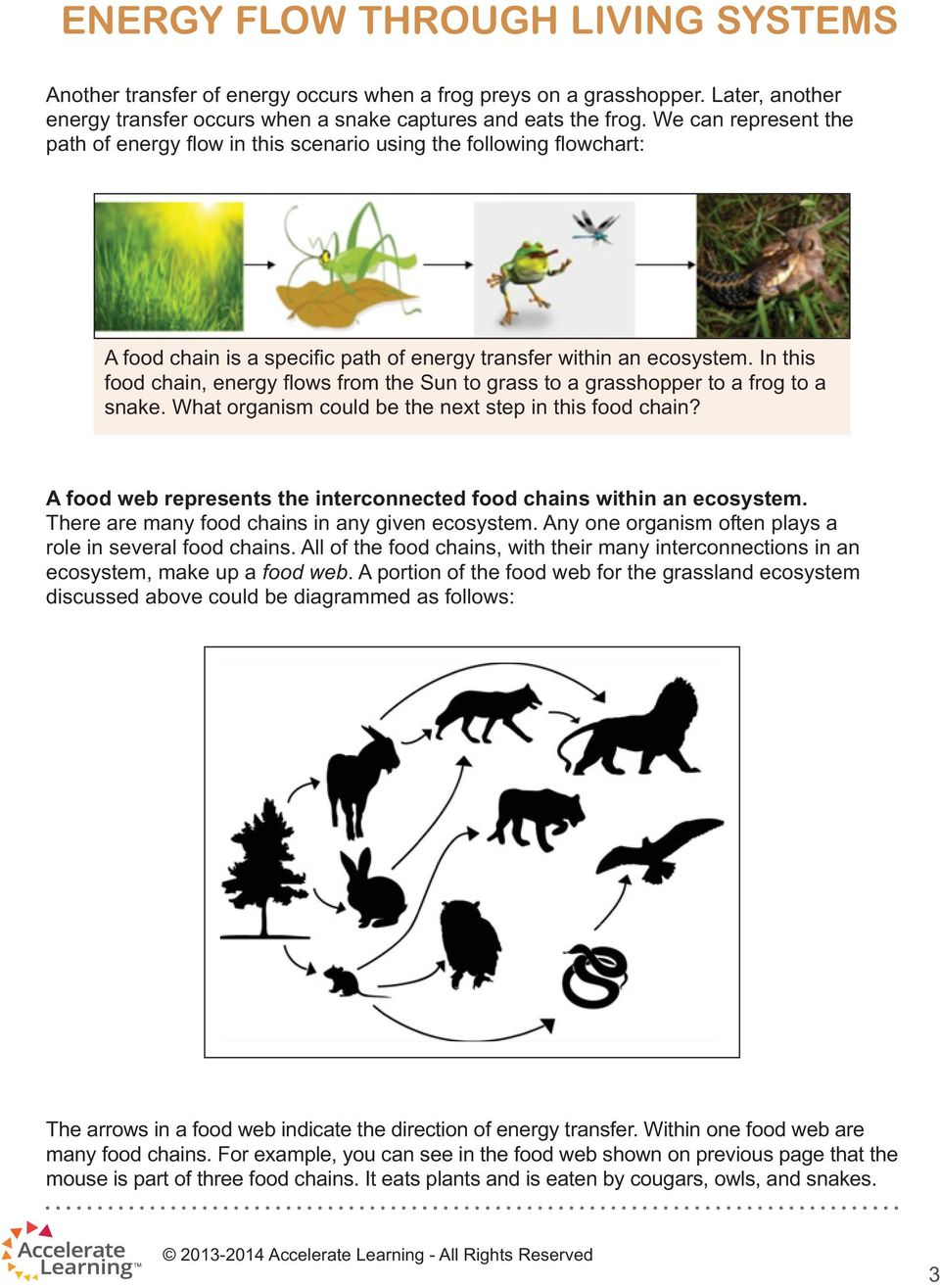 In this food chain, energy fl ows from the Sun to grass to a grasshopper to a frog to a snake. What organism could be the next step in this food chain?