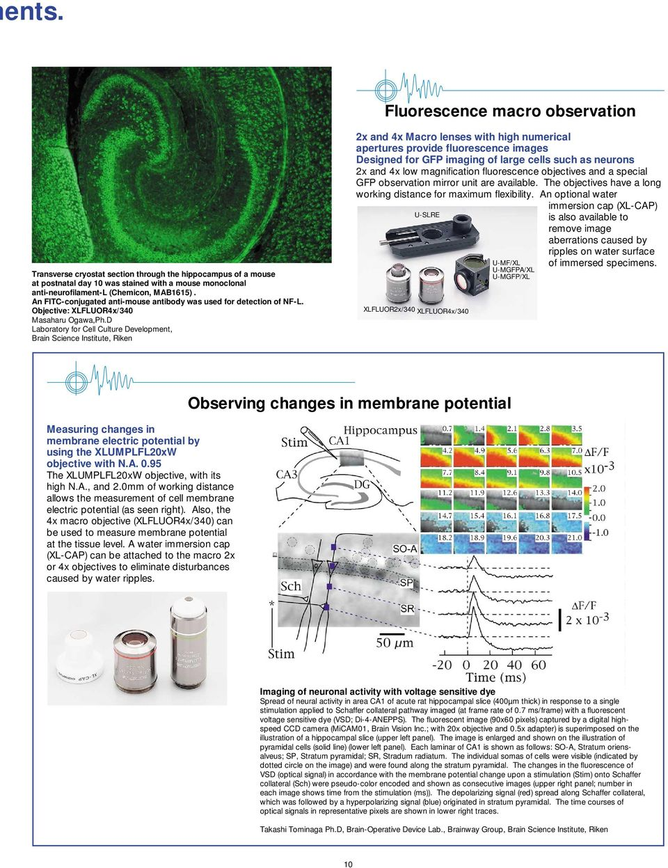 D Laboratory for Cell Culture Development, Brain Science Institute, Riken 2x and 4x Macro lenses with high numerical apertures provide fluorescence images Designed for GFP imaging of large cells such