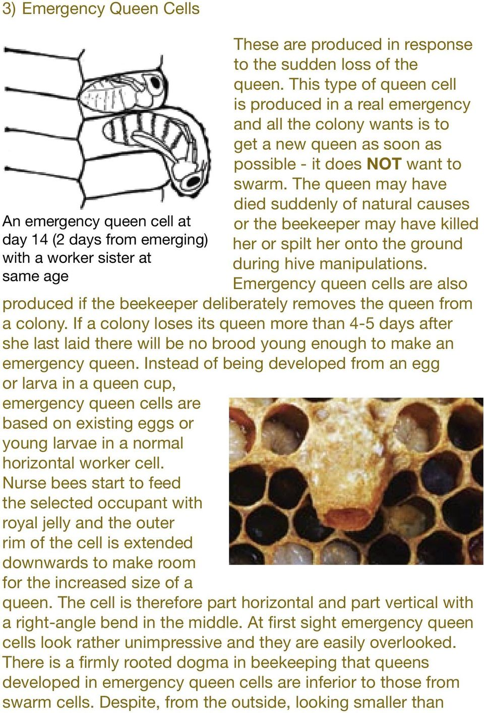 The queen may have died suddenly of natural causes or the beekeeper may have killed her or spilt her onto the ground during hive manipulations.