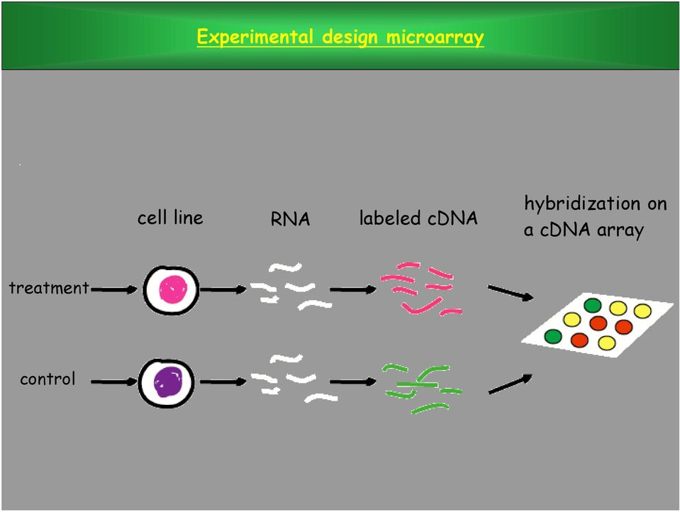 labeled cdna hybridization