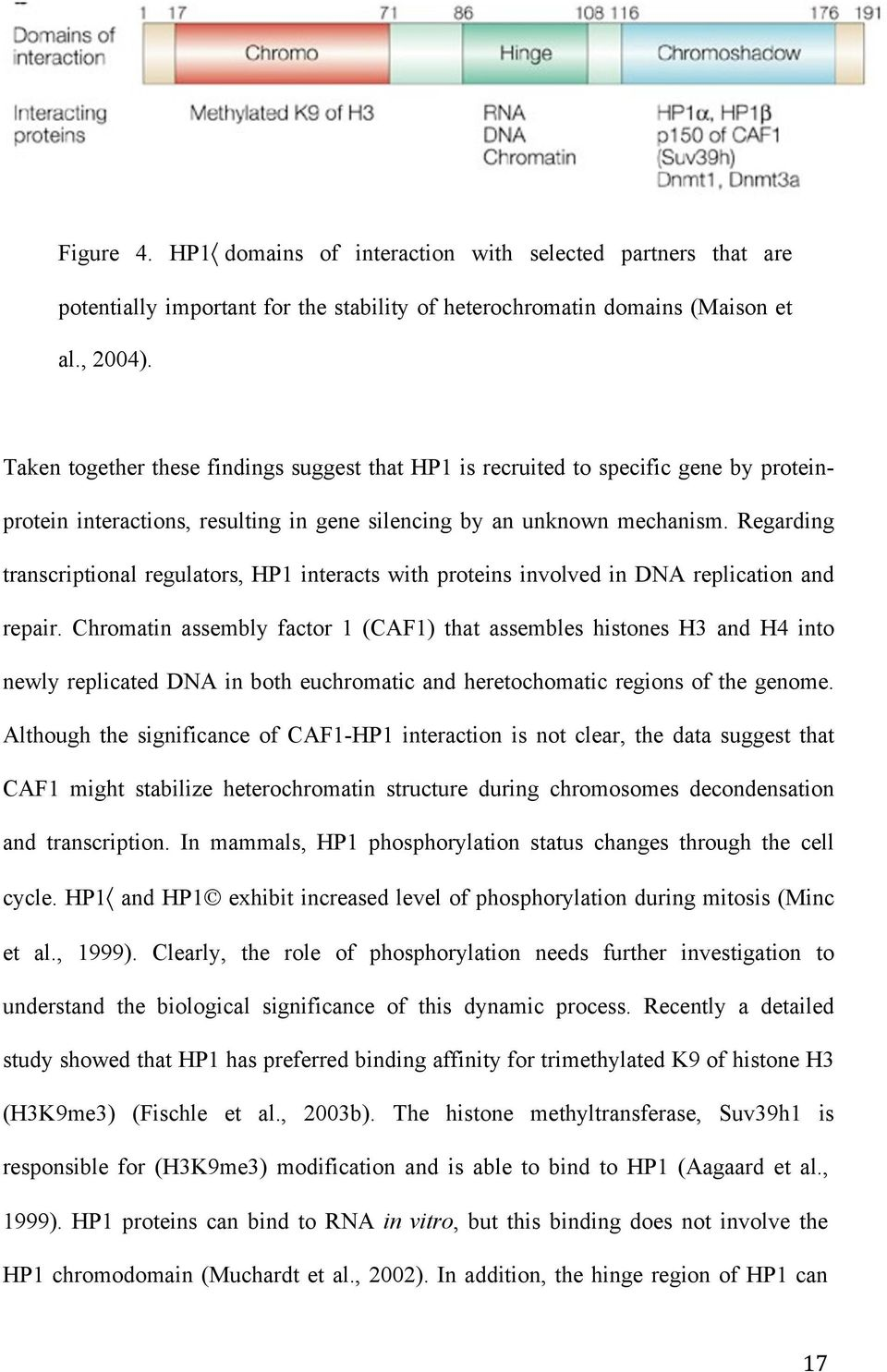 Role Of Asf1 In Histone Deposition During Replication Vivek