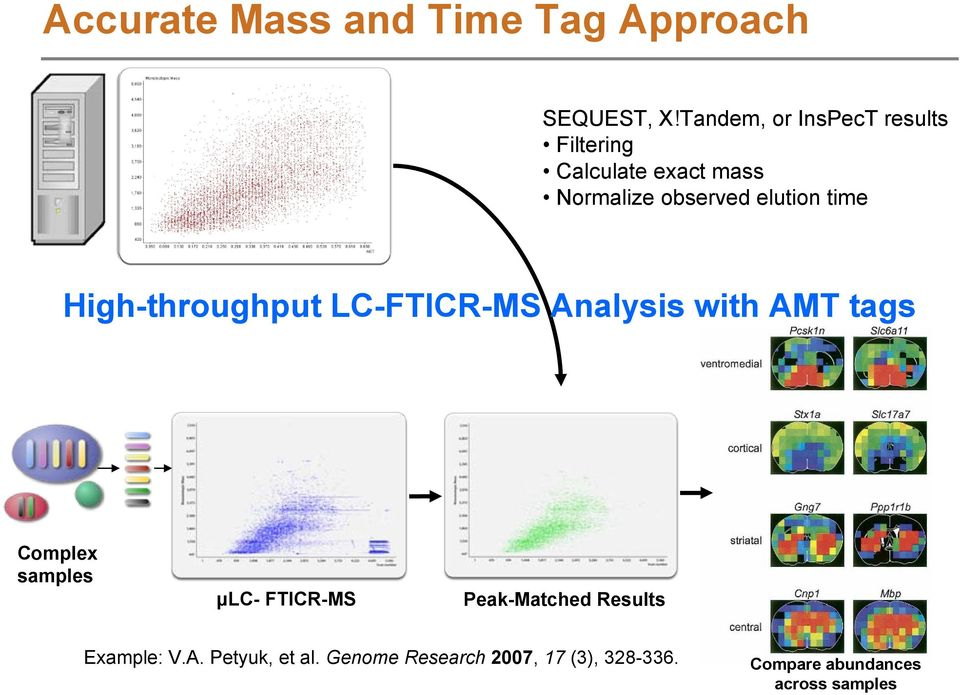 High-throughput LC-FTICR-MS with AMT tags Complex samples μlc- FTICR-MS