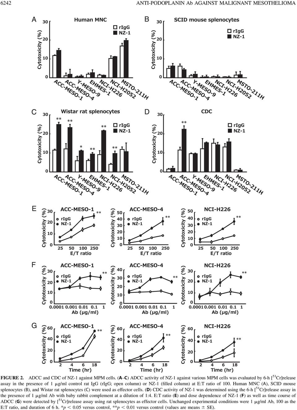 100. Human MNC (A), SCID mouse splenocytes (B), and Wistar rat splenocytes (C) were used as effector cells.