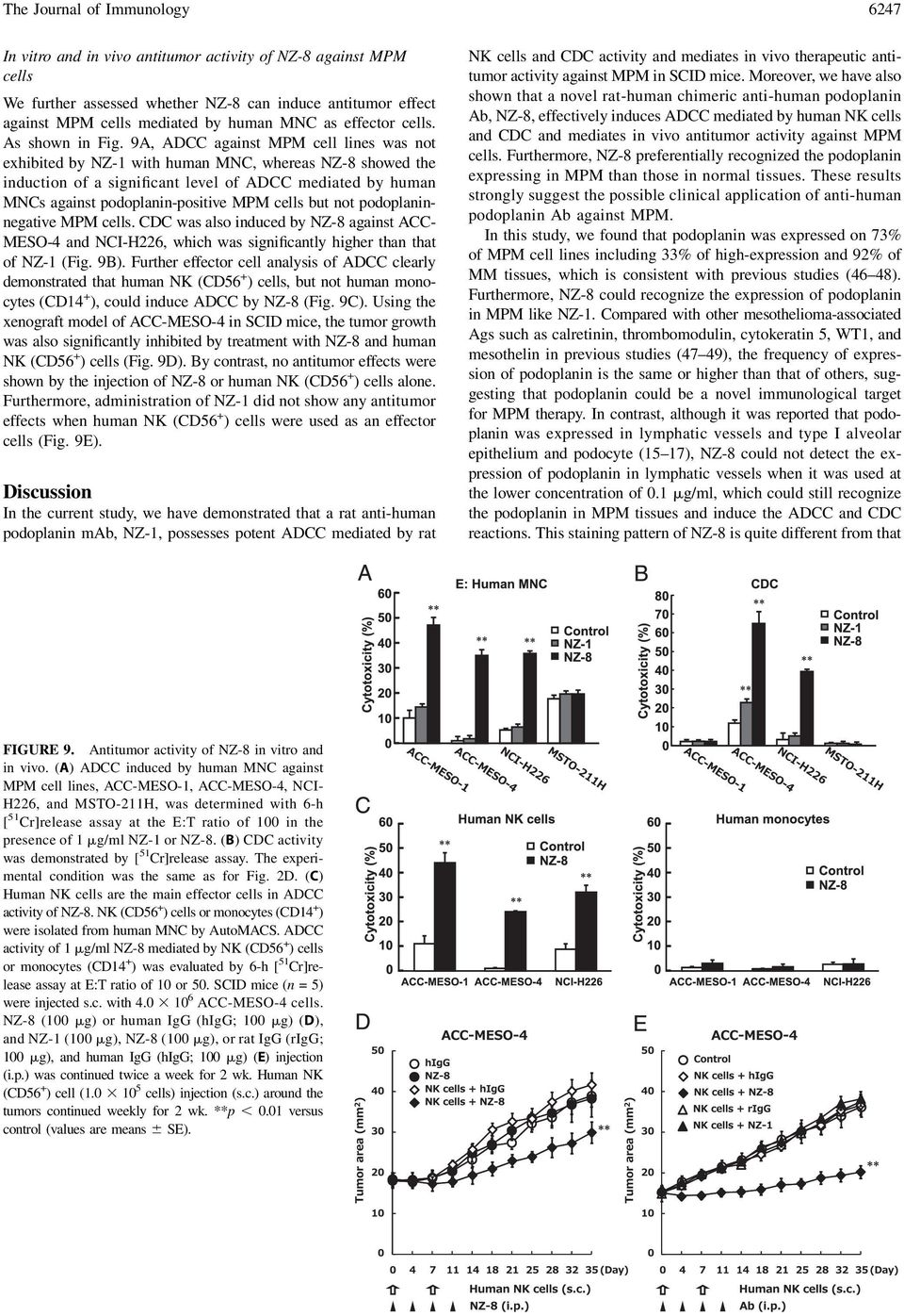 9A, ADCC against MPM cell lines was not exhibited by NZ-1 with human MNC, whereas NZ-8 showed the induction of a significant level of ADCC mediated by human MNCs against podoplanin-positive MPM cells