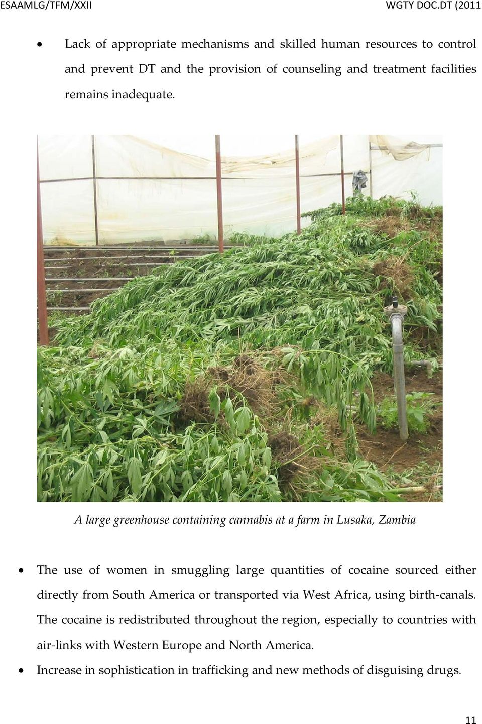 A large greenhouse containing cannabis at a farm in Lusaka, Zambia The use of women in smuggling large quantities of cocaine sourced either directly