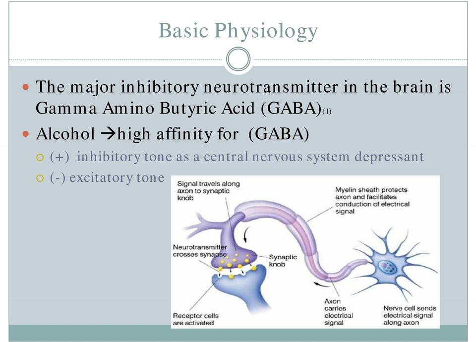 Alcohol high affinity for (GABA) (+) inhibitory tone