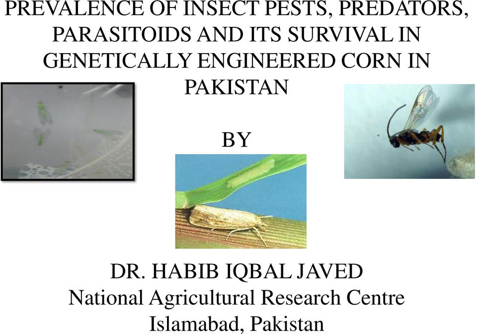 ENGINEERED CORN IN PAKISTAN BY DR.