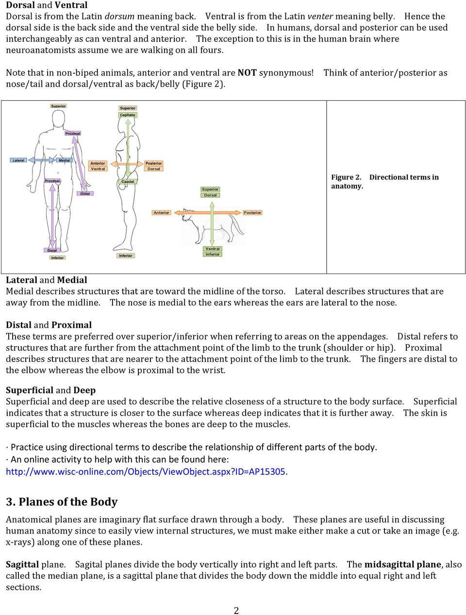 worksheet Directional Terminology Worksheet laboratory 1 anatomical planes and regions pdf note that in non biped animals anterior ventral are not synonymous nose