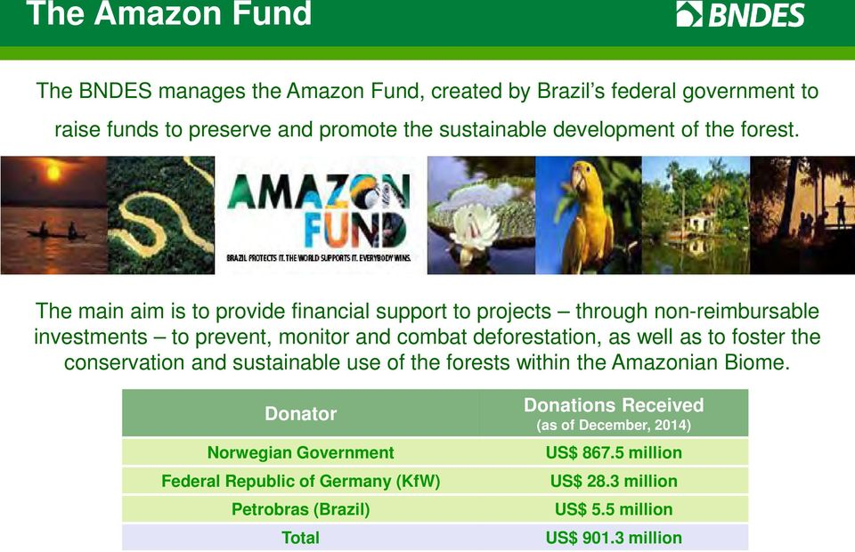 The main aim is to provide financial support to projects through non-reimbursable investments to prevent, monitor and combat deforestation, as well as