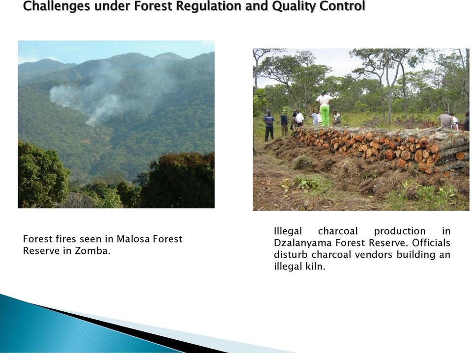 Illegal charcoal production in Dzalanyama Forest Reserve.