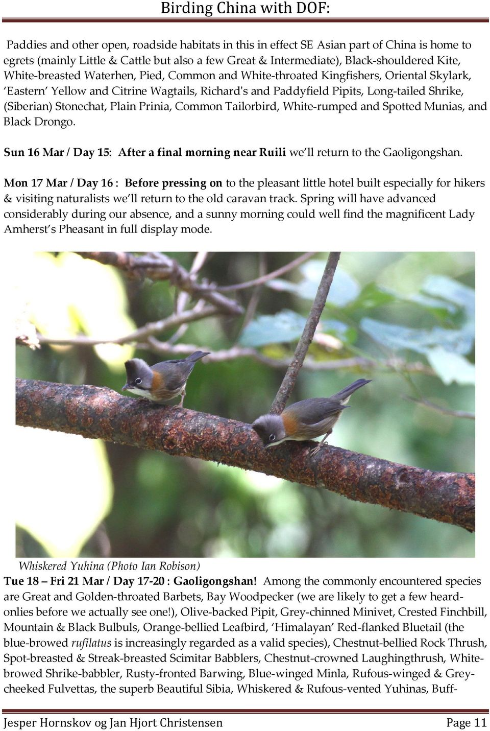 Plain Prinia, Common Tailorbird, White-rumped and Spotted Munias, and Black Drongo. Sun 16 Mar / Day 15: After a final morning near Ruili we ll return to the Gaoligongshan.