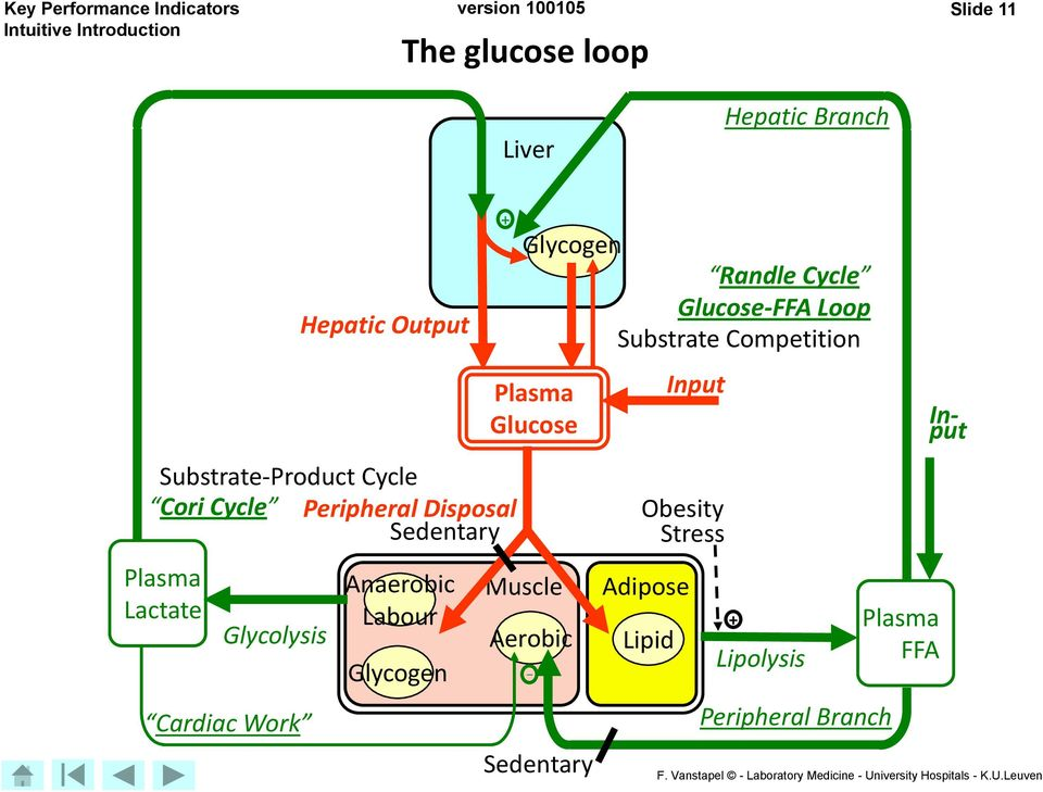 Work Anaerobic Labour Glycogen + Glycogen Randle Cycle Glucose-FFA Loop Substrate Competition Plasma