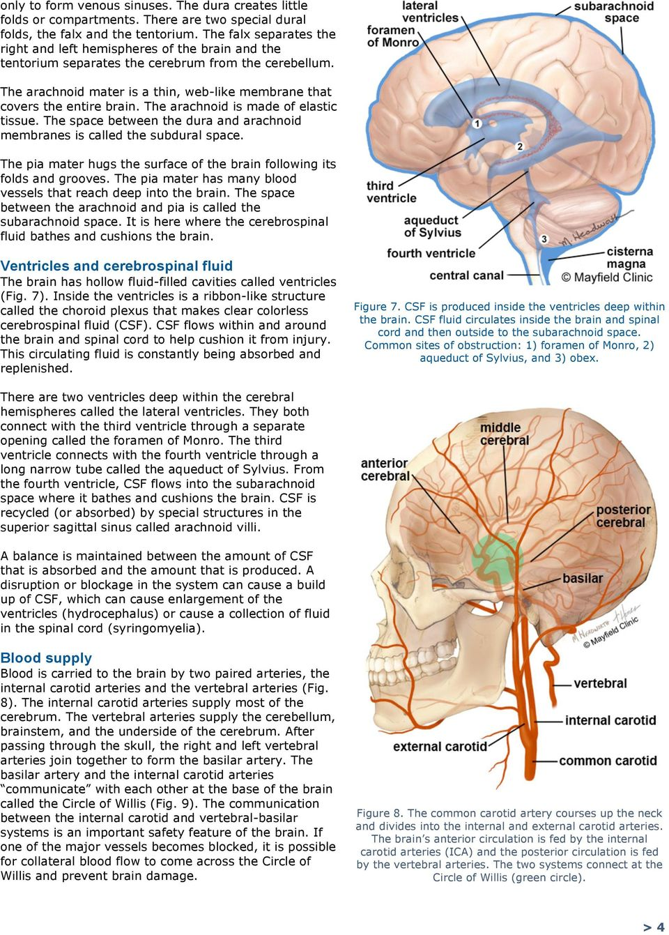 The arachnoid mater is a thin, web-like membrane that covers the entire brain. The arachnoid is made of elastic tissue. The space between the dura and arachnoid membranes is called the subdural space.