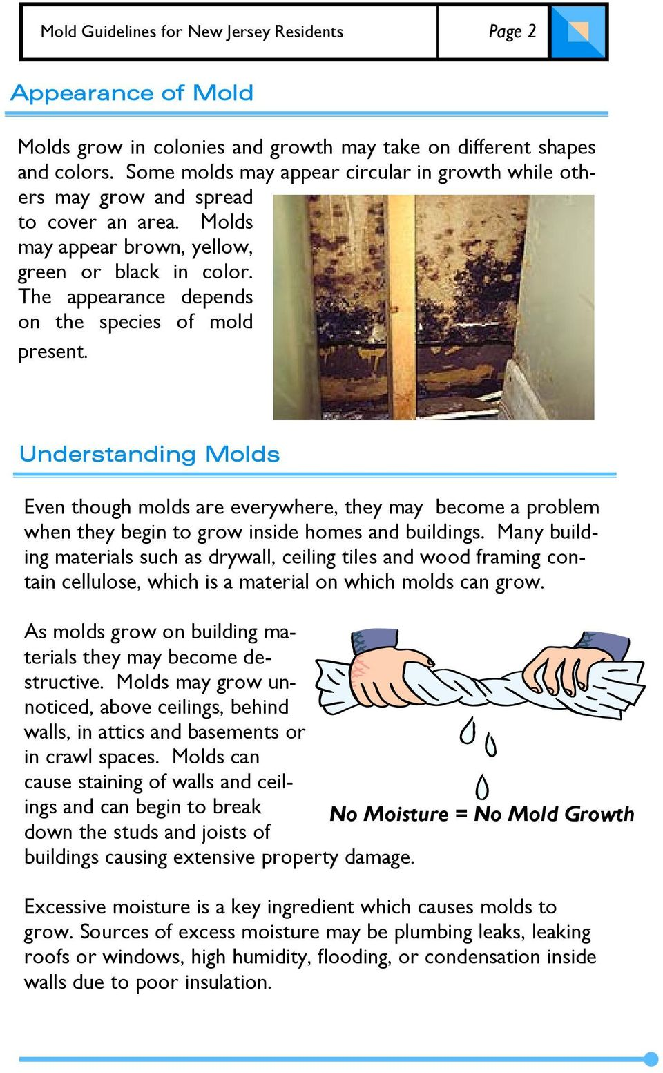 The appearance depends on the species of mold present. Understanding Molds Even though molds are everywhere, they may become a problem when they begin to grow inside homes and buildings.