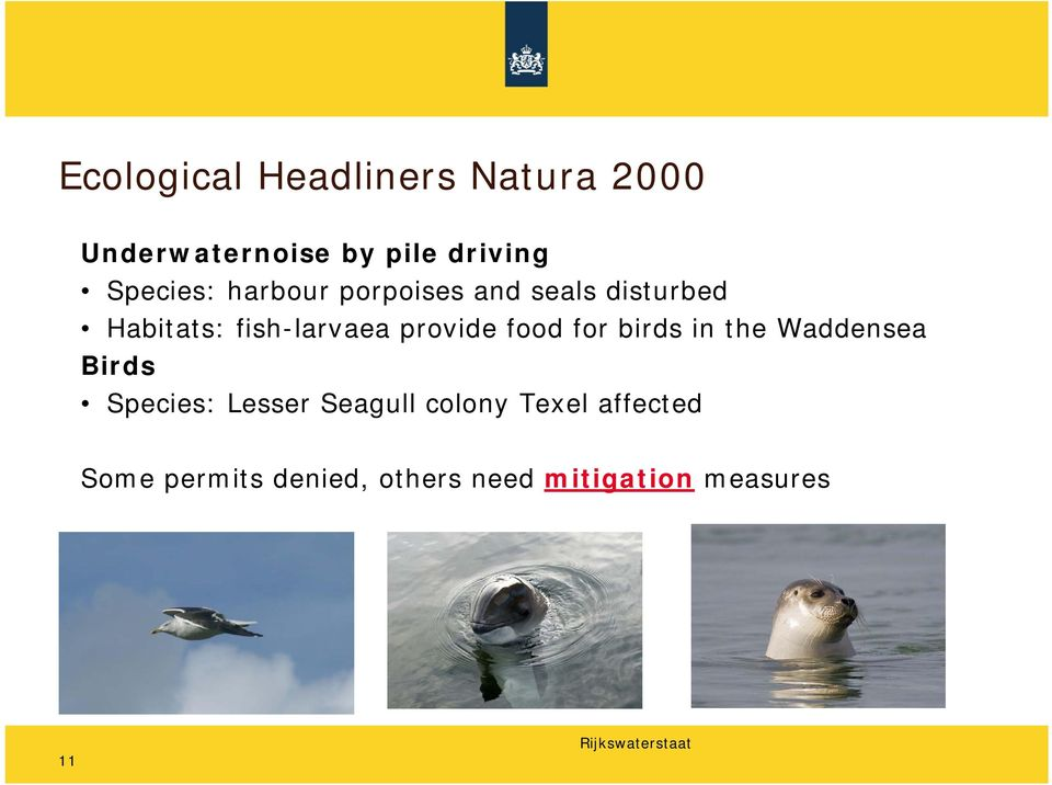 provide food for birds in the Waddensea Birds Species: Lesser Seagull