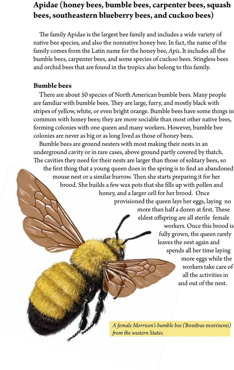 It includes all the bumble bees, carpenter bees, and some species of cuckoo bees. Stingless bees and orchid bees that are found in the tropics also belong to this family.