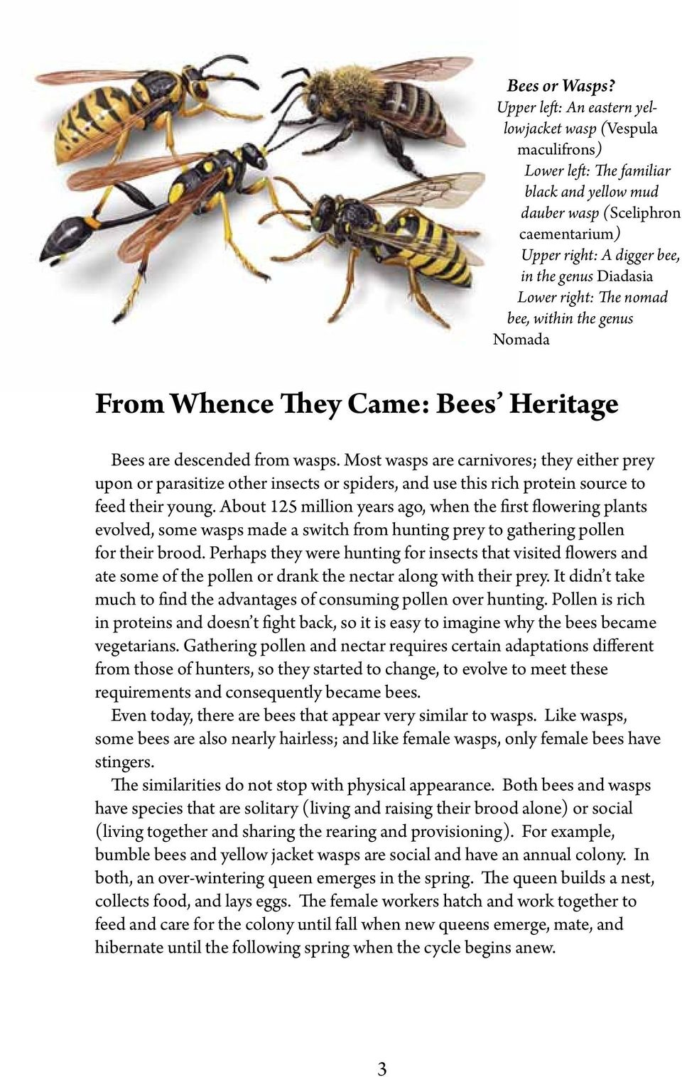 Lower right: The nomad bee, within the genus Nomada From Whence They Came: Bees Heritage Bees are descended from wasps.