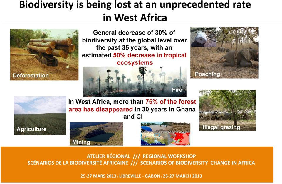 decrease in tropical ecosystems Deforestation Poaching Fire In West Africa, more than 75%