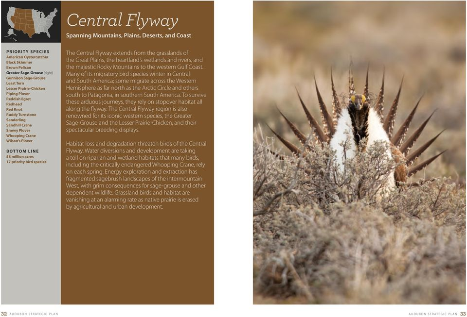 species the central Flyway extends from the grasslands of the great Plains, the heartland s wetlands and rivers, and the majestic rocky Mountains to the western gulf coast.