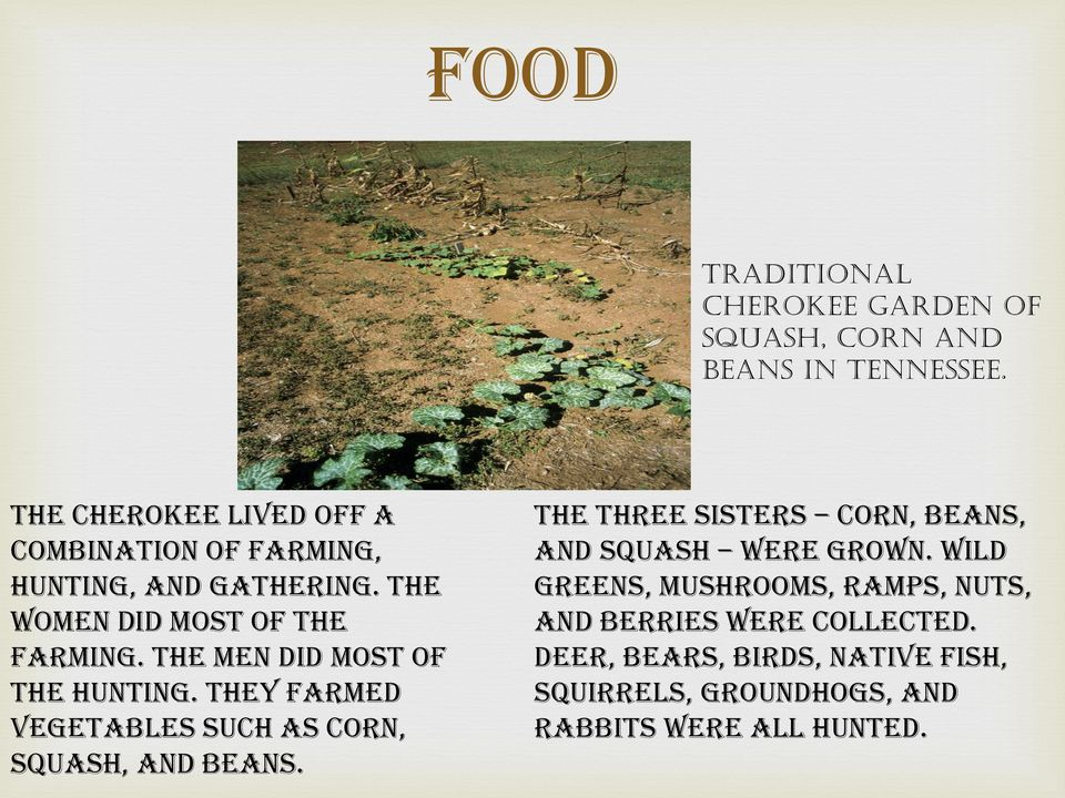 The men did most of the hunting. They farmed vegetables such as corn, squash, and beans.