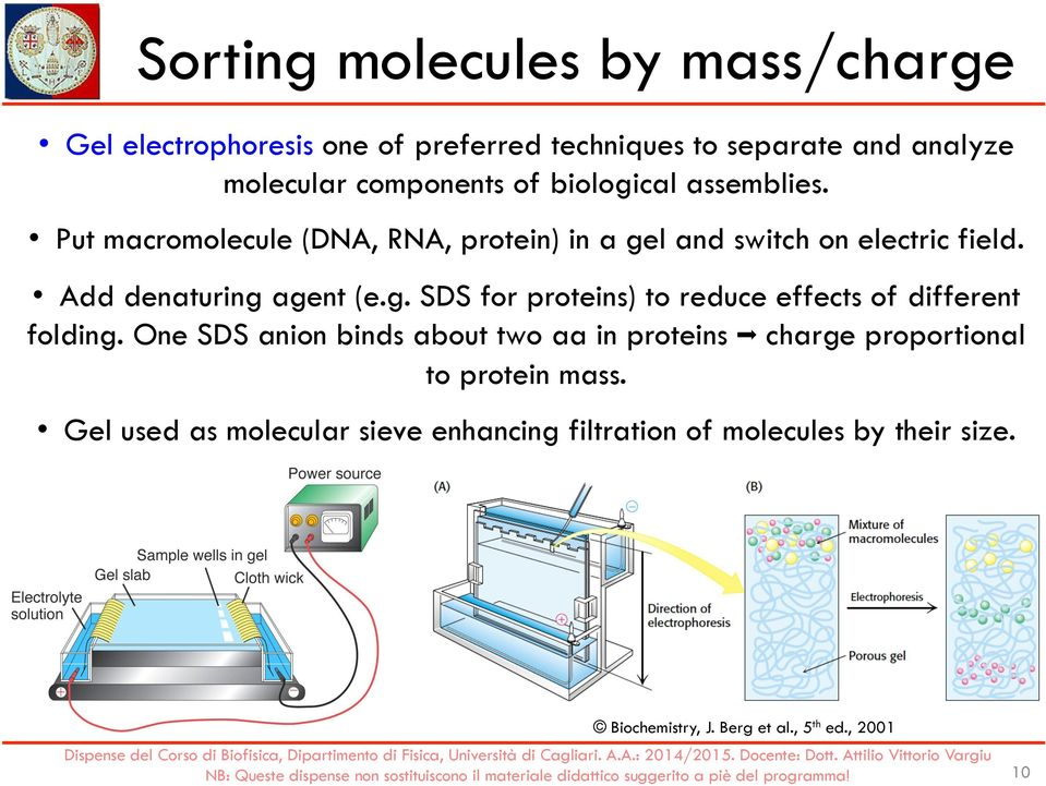 One SDS anion binds about two aa in proteins charge proportional to protein mass.